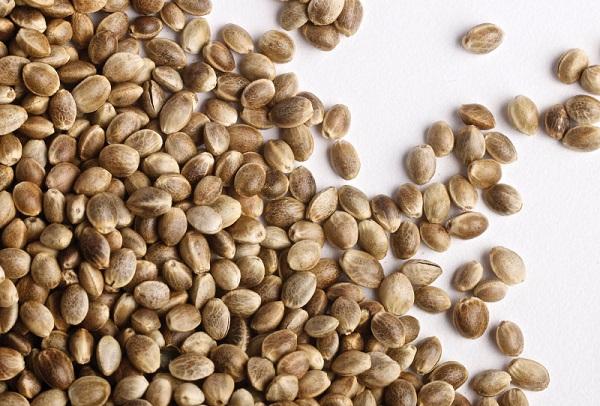 Как лечиться семенами конопли?